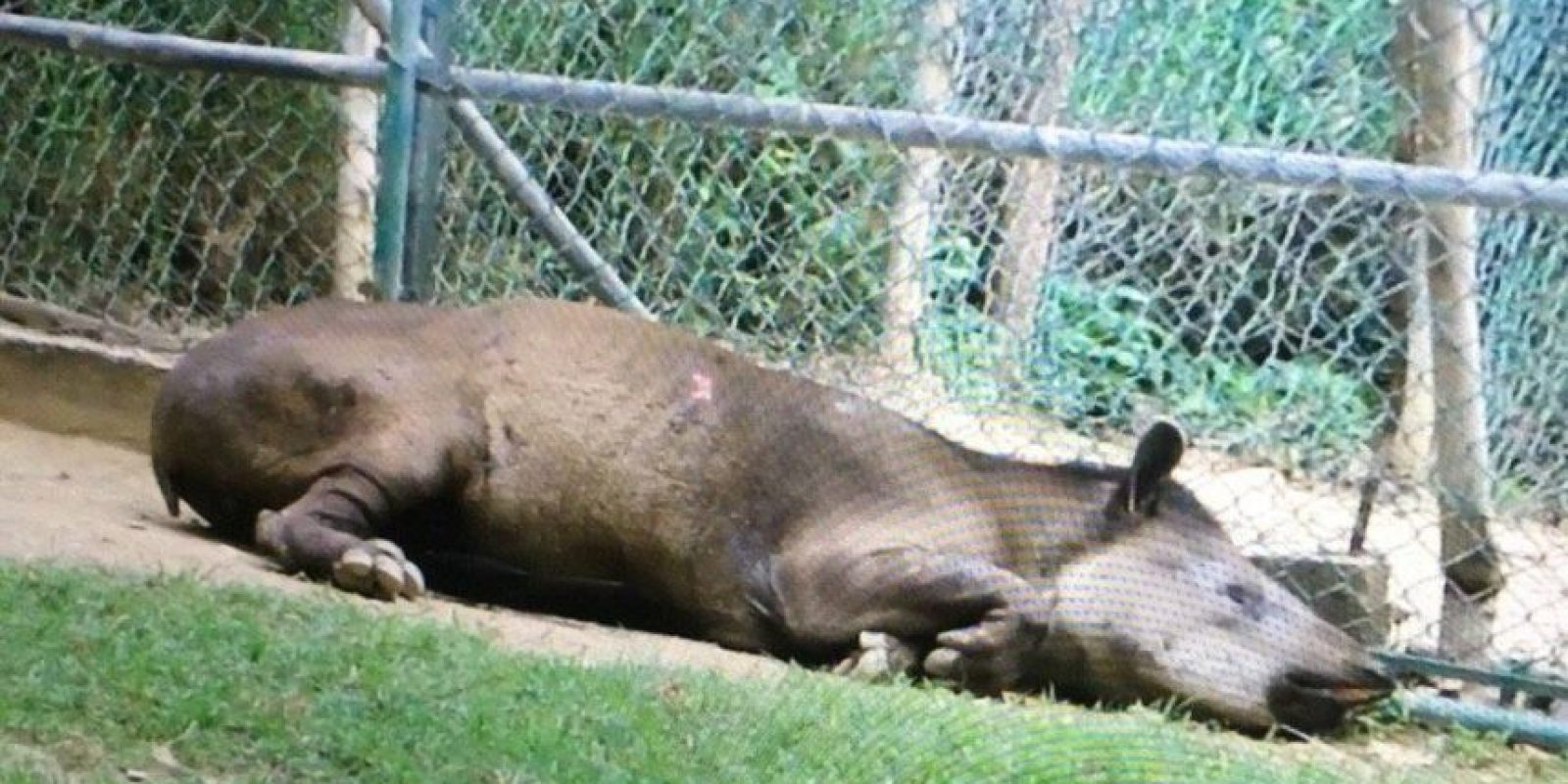 También se reporta la muerte de animales por desnutrición Foto:Facebook.com/marlene.sifontesguevara