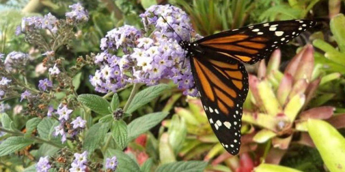 Regresa exposición de mariposas al Jardín Botánico de Quito