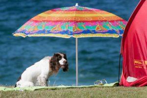 4. Informarse antes de tener una mascota Foto:Getty Images