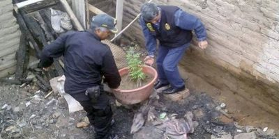 La policía confiscó las macetas. Foto:Policía Nacional del Perú