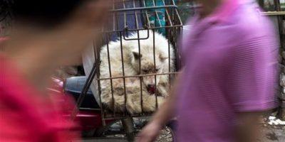 Las personas pueden caminar entre puestos callejeros en los que se vende carne de perro de todo tipo, tanto vivos como muertos Foto:AP
