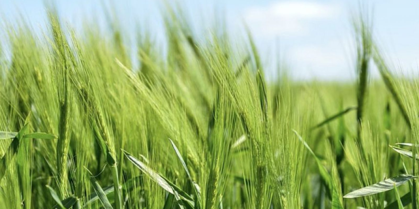2. Agricultura. 23.1% de los trabajadores son de origen latino o hispano. Foto:Pixabay