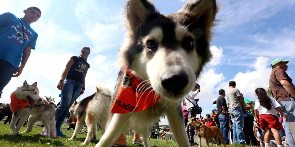 En Guayaquil se realizará caminata animalista