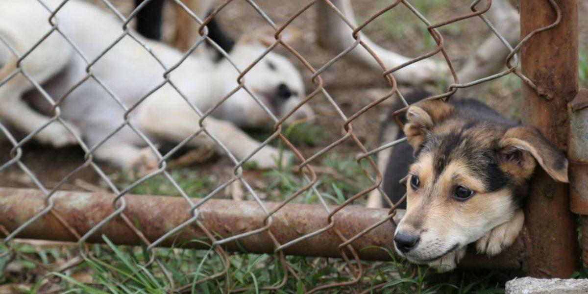 Hombre es juzgado por maltratar a su perro en Cuenca