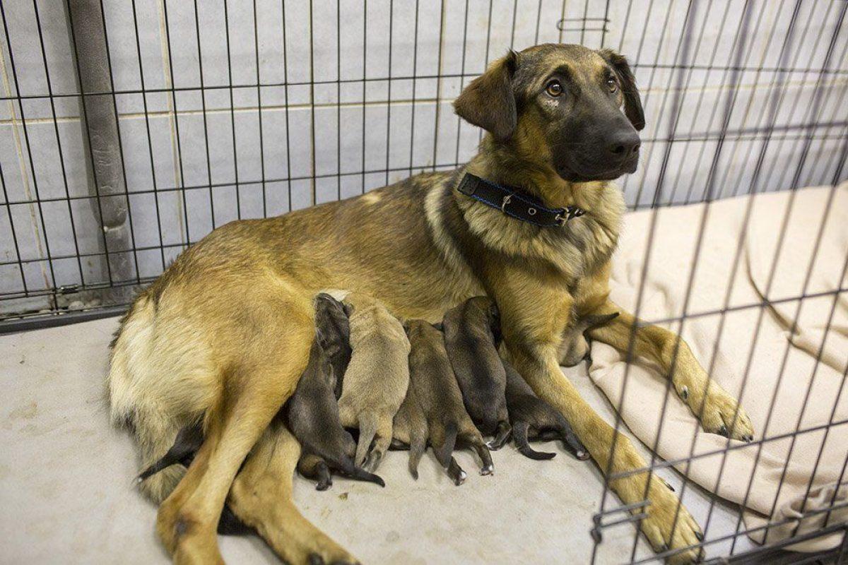 Pasajeros del Metro ayudan a perrita a tener a sus 9 cachorros. Imagen Por: Twitter.com/moscowmetro
