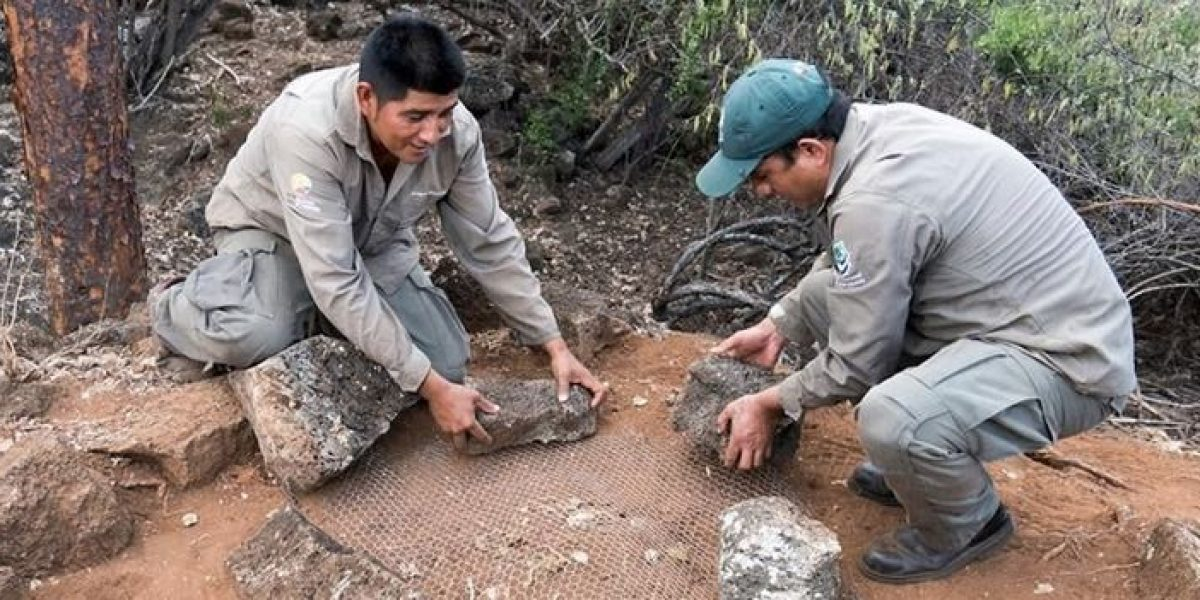 313 nidos de tortugas fueron protegidos en Santa Cruz