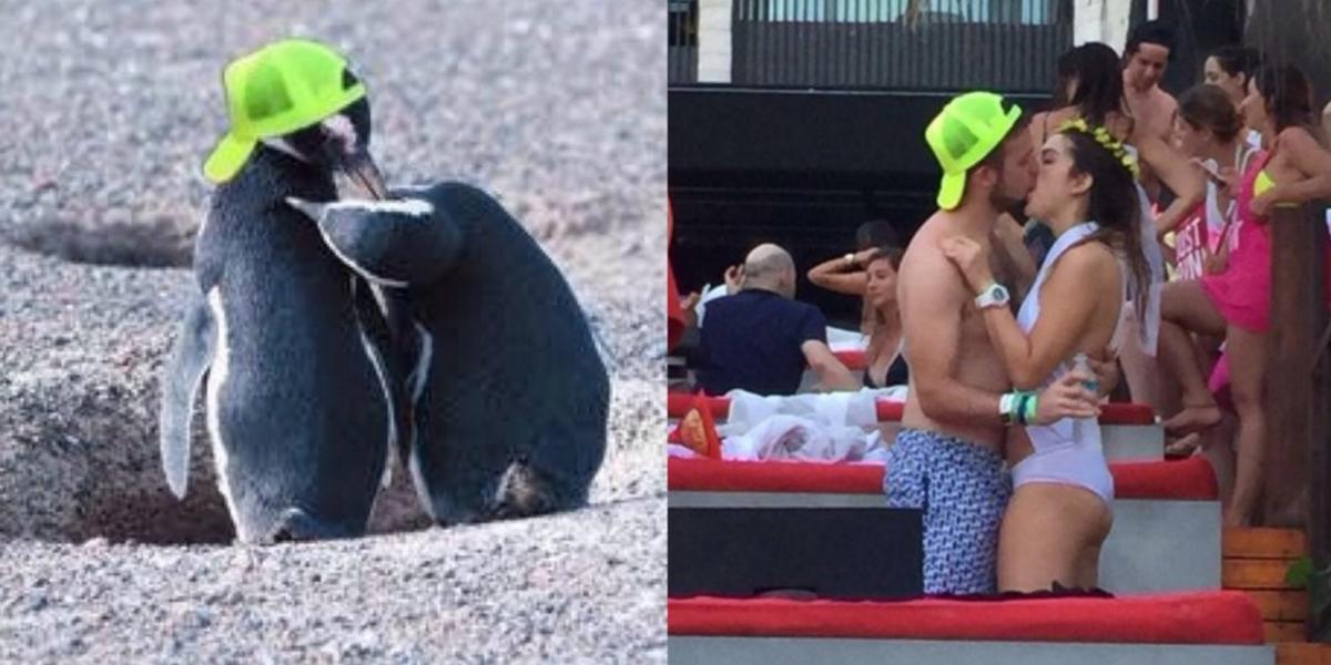 Pingüina le es infiel a su pareja y la convierten en #LadyPingüina