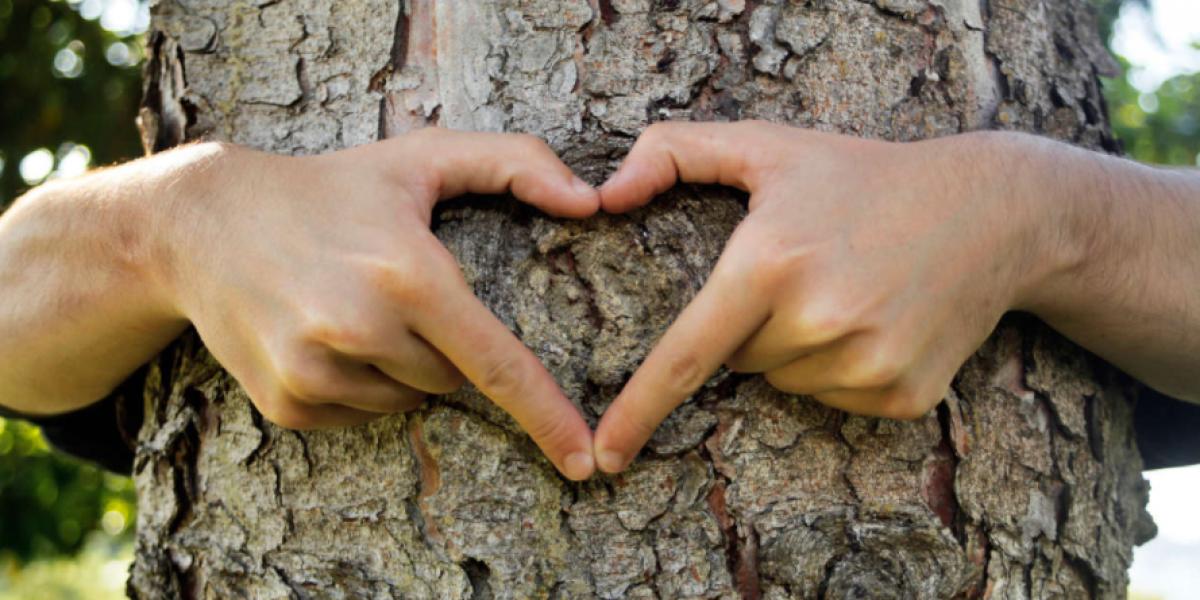 Beneficios de tener contacto con la naturaleza
