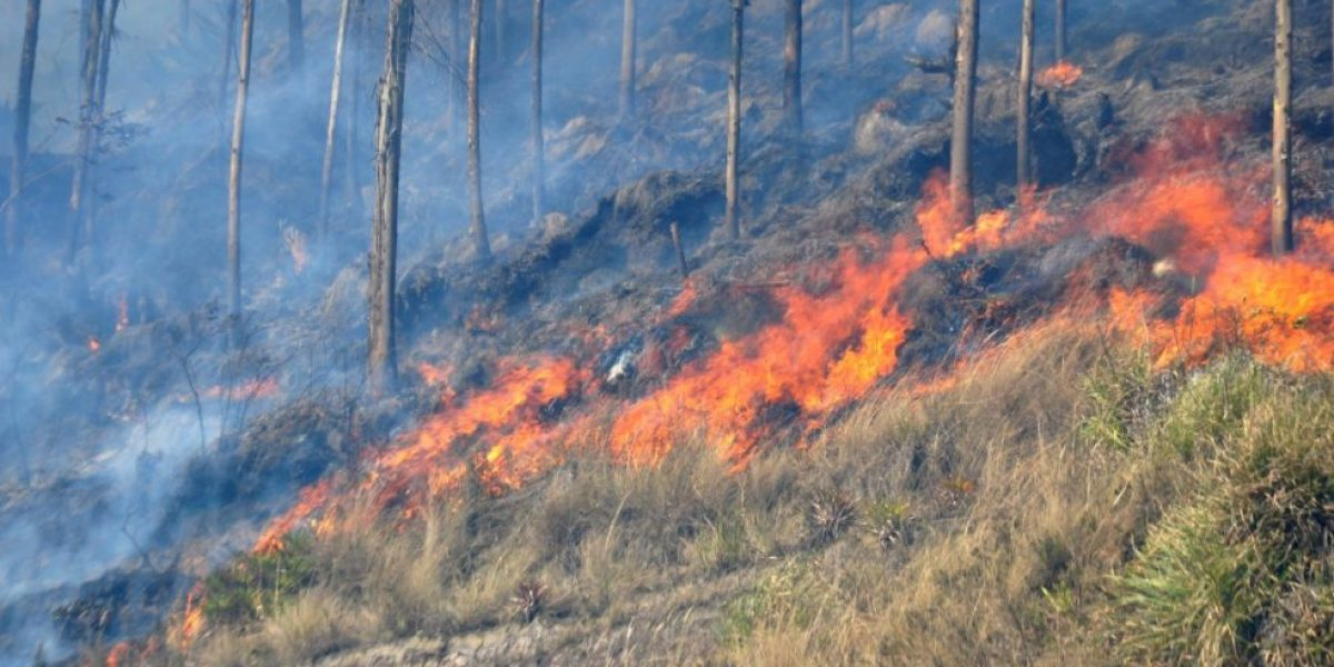 Ambato con mayor afectación por incendios forestales en Tungurahua
