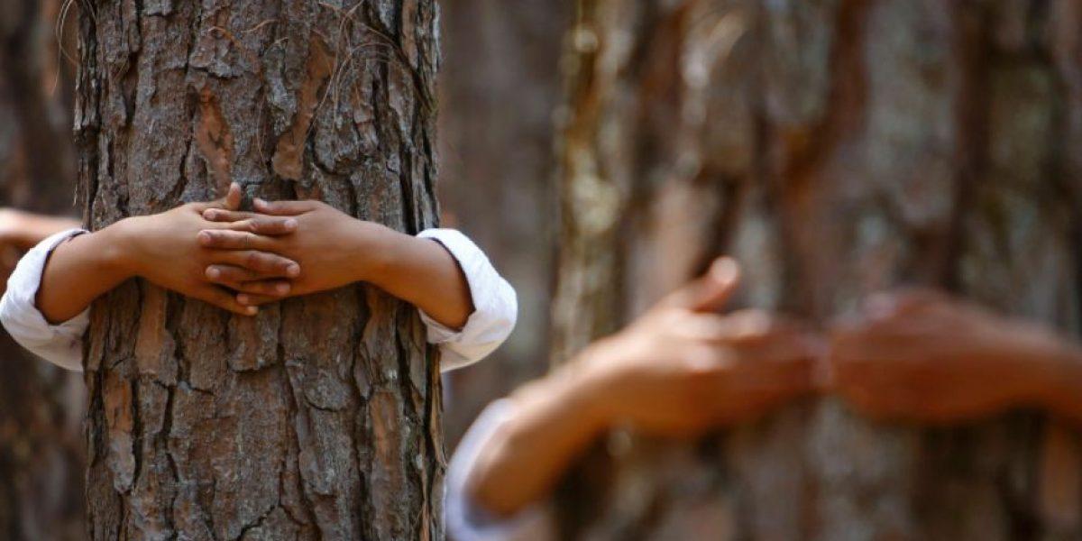 Propiedades curativas por abrazar a algunos árboles