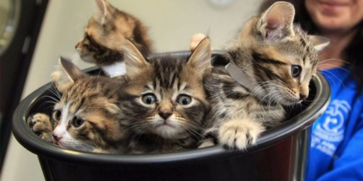 Condenan a una australiana por abandonar 14 gatos que se devoraron por hambre