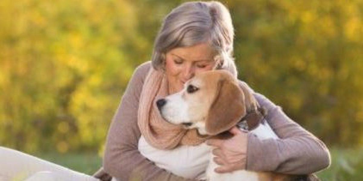 Perros podrían tener memoria episódica y recordar que hacen sus dueños