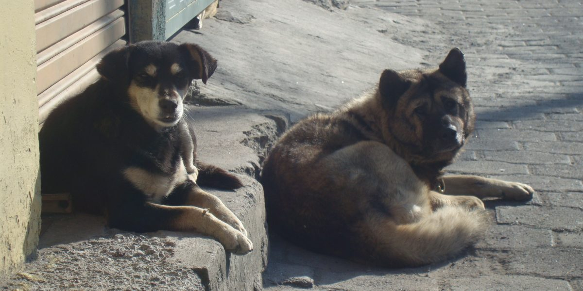 perros deambulan Quito
