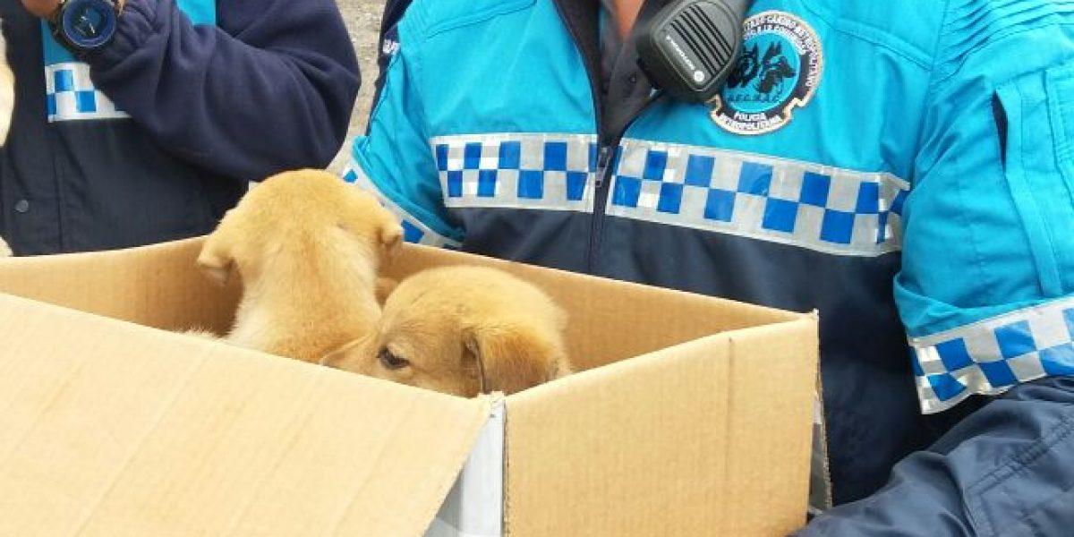 En enero se efectuaron 59 rescates de animales en Quito