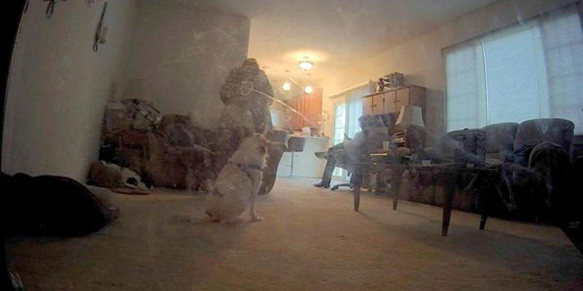 Perro descubre fantasma de la guerra civil