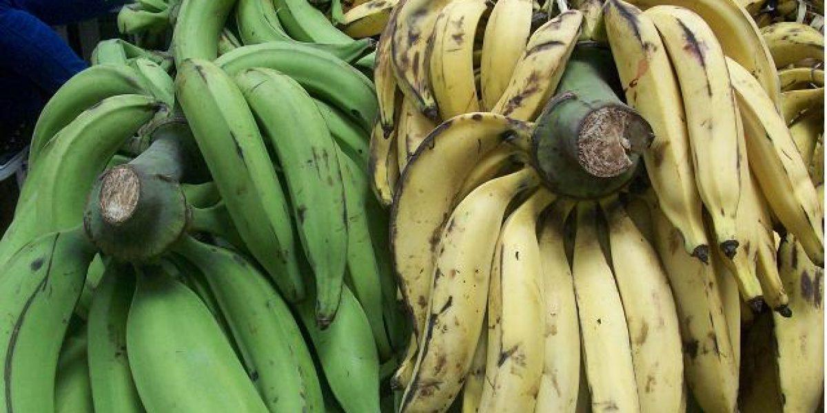 El PE aumenta protección plátanos europeos frente a importaciones de Ecuador