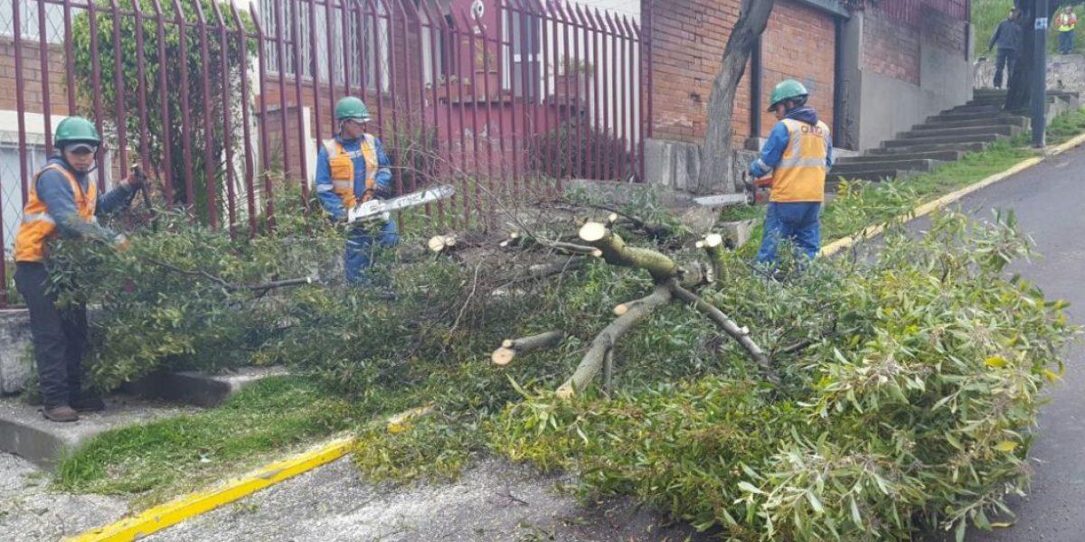 Un árbol se cayó en la avenida Portugal y Eloy Alfaro