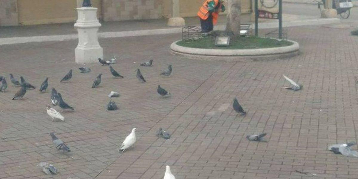 Encuentran palomas muertas en plazas centrales de Loja