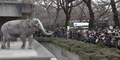 Elefante mató a empleado de zoológico en Japón