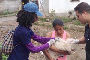 Caninos y felinos son inmunizados en Guayaquil
