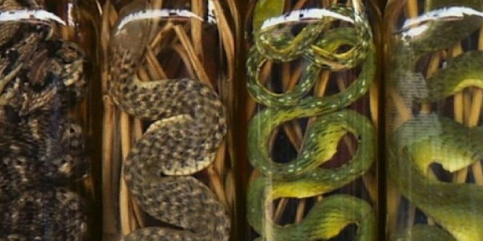 Vino de serpiente. Típico de Asia, se combina con destilado de arroz y se le atribuyen propiedades medicinales