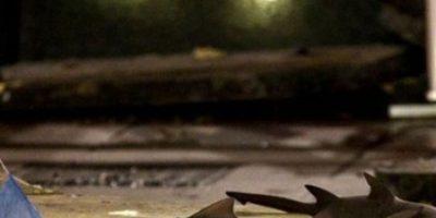 Gigantesco acuario de tiburones explota en Shangái
