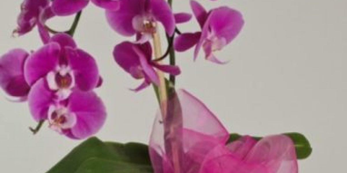 Regala flores y ayuda a niños con cáncer