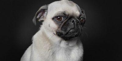 Fotógrafo capta a perros con expresiones de humanos