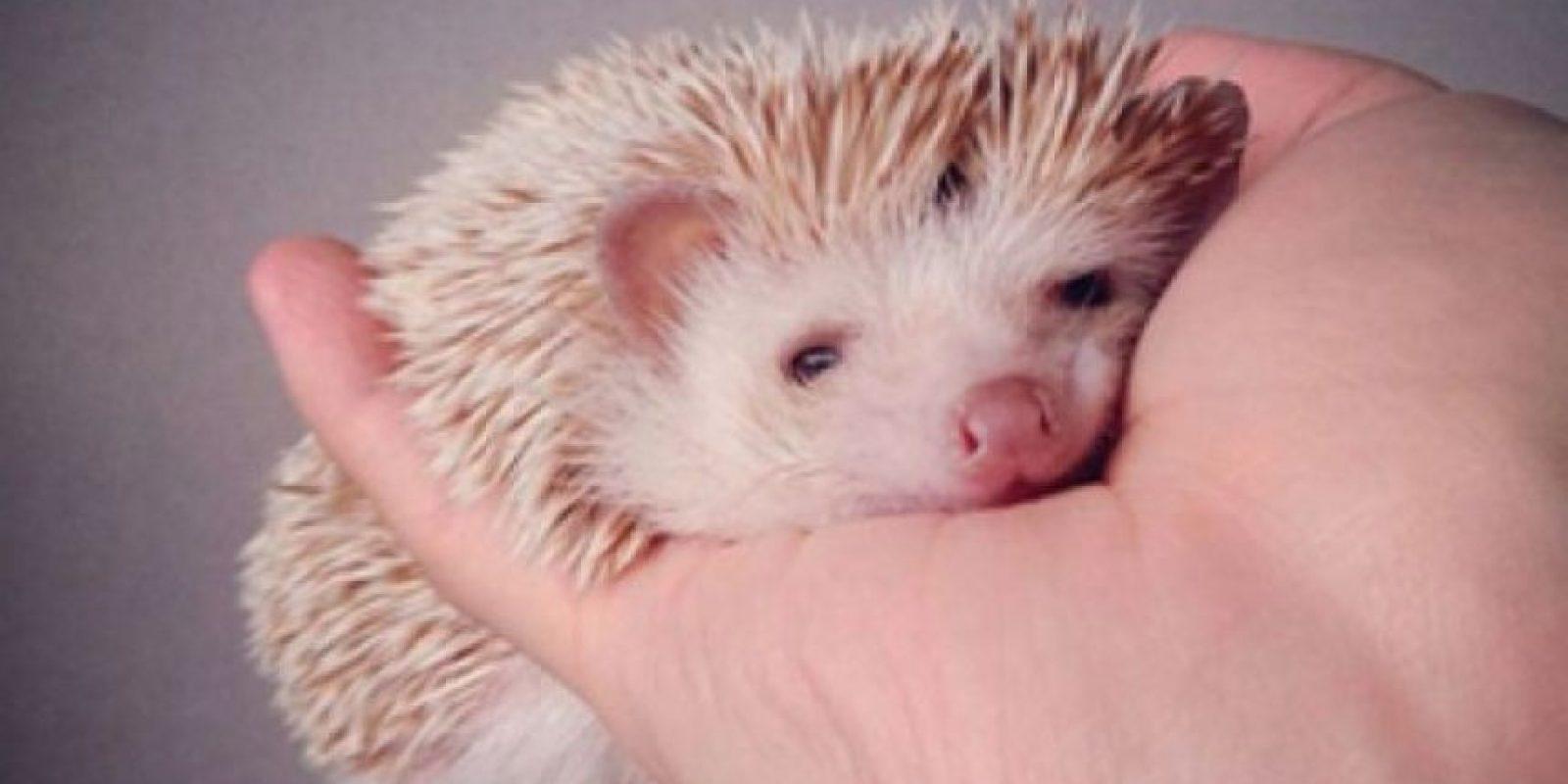 Fotos: darcytheflyinghedgehog