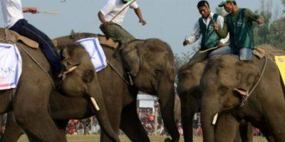 """FOTOS: Celebran el """"Festival del Elefante"""" jugando futbol"""