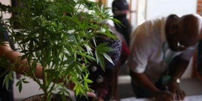 Realizan feria del empleo de la marihuana en Denver