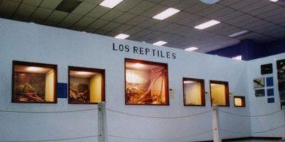Foto. Cortesía