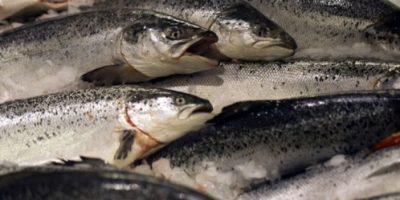 Pescado. Muchas especies de peces como el salmón y la trucha están desapareciendo porque son especialmente susceptibles, ya que necesitan de corrientes frías de agua en los ríos.