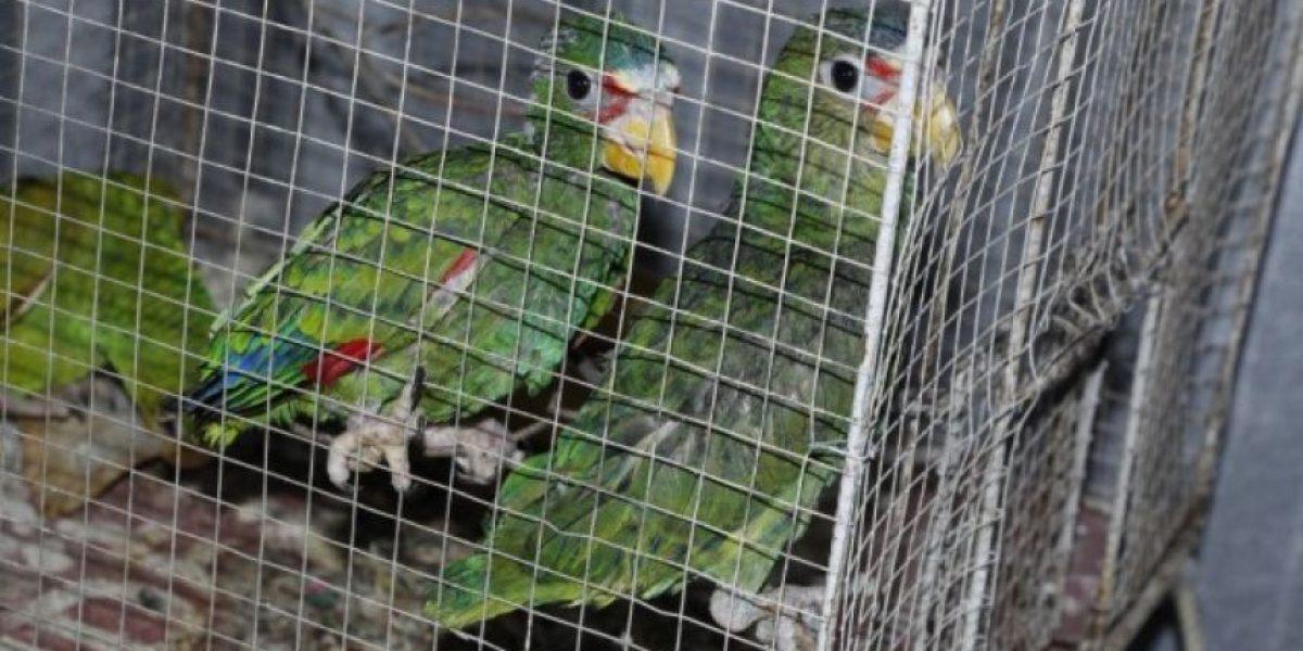 Capturan a hombre por intentar vender animales en peligro de extinción