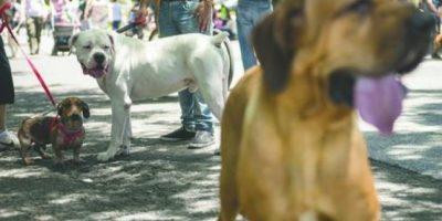 Catorce perros encontraron un hogar en la jornada ¡Adógtame!