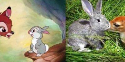 FOTOS. Imágenes de las películas de Disney con animales reales