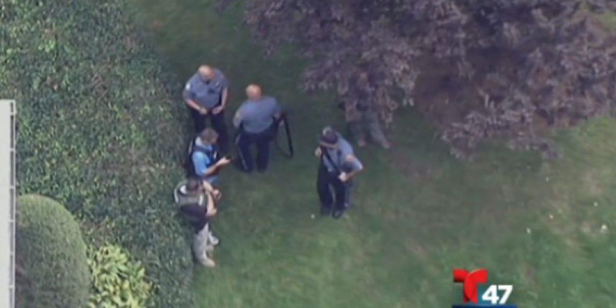 VIDEO.  Capturan a oso en New Jersey