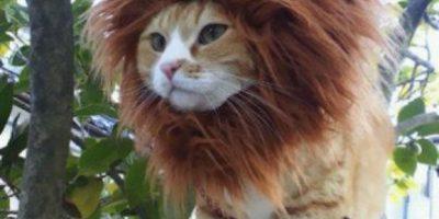 Los disfraces más adorables para gatos