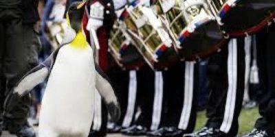 Galería. Conoce a Sir Nils Olav, el pingüino del Ejército noruego