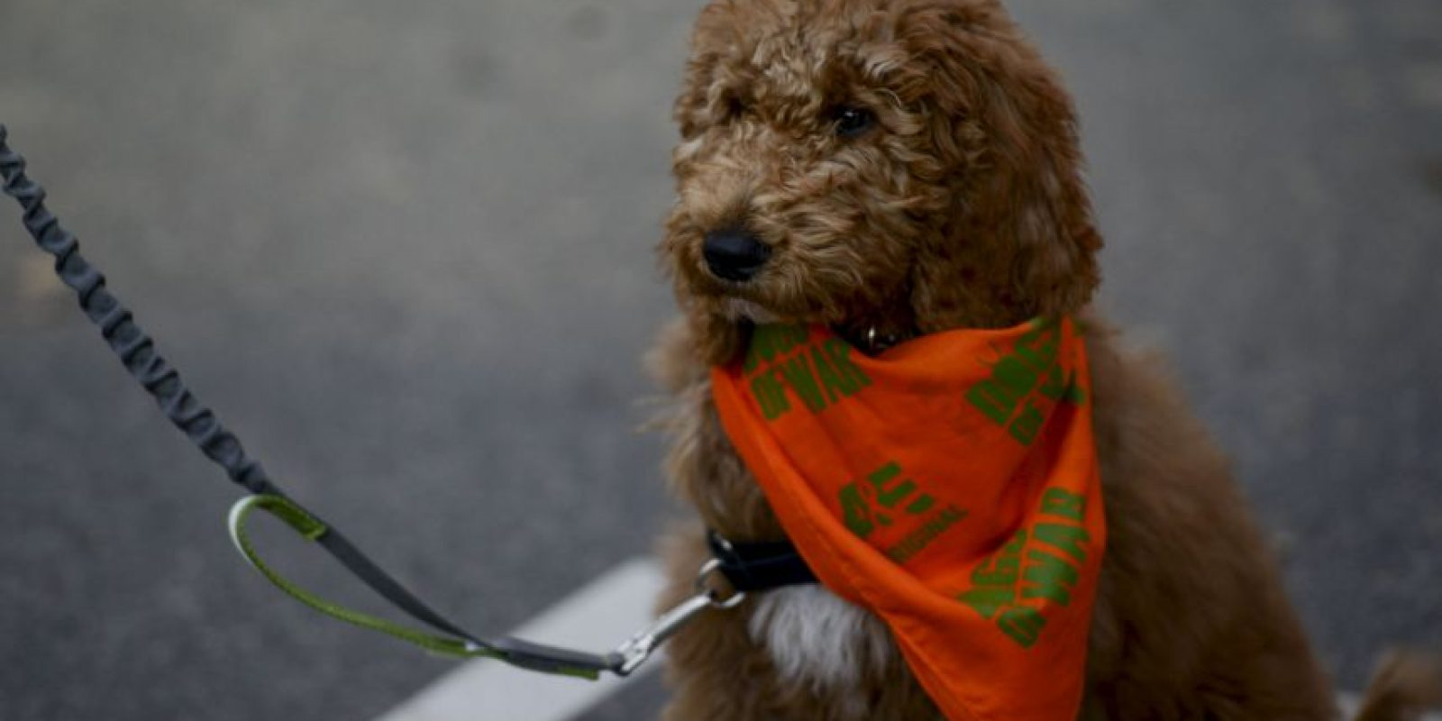 Caminar con perros y monos al aire libre será castigado con 74 latigazos o una multa de hasta tres mil dólares. Foto:Getty Images