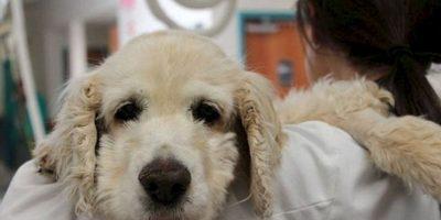 Los 7 peores casos de crueldad animal jamás vistos Al final, quedó así, luego de la rehabilitación. Foto:Facebook
