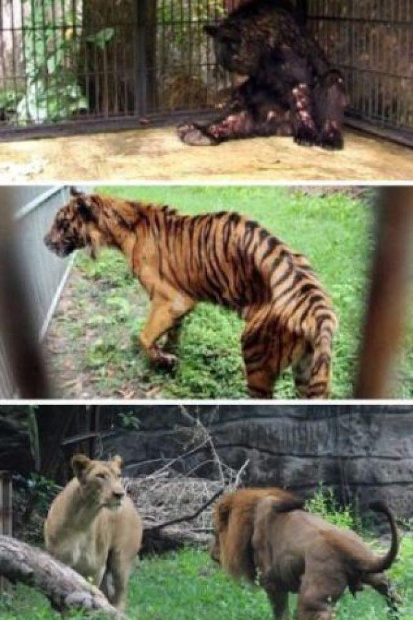 El zoológico que dejaba morir a sus animales Foto:Oddee