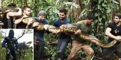 Hay quienes señalan que, a diferencia de Rosolie, Irwin jamás provocó daño alguno a un animal Foto:Vía Twitter