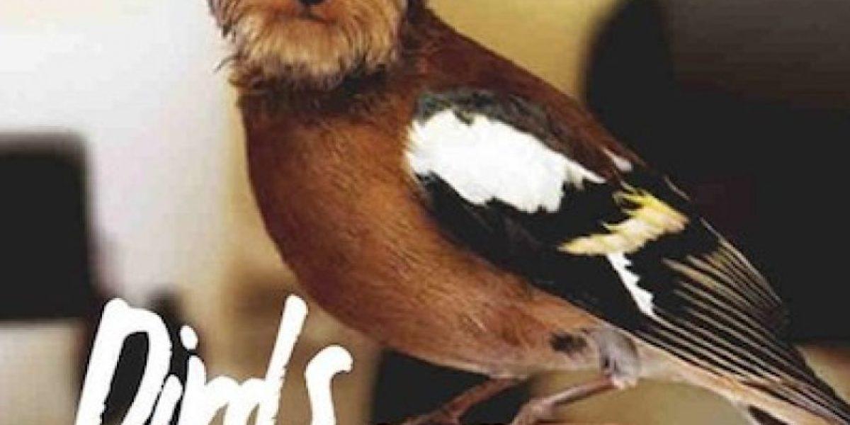 """Usuarios de internet """"cruzan"""" perros con aves en experimento de fotos"""