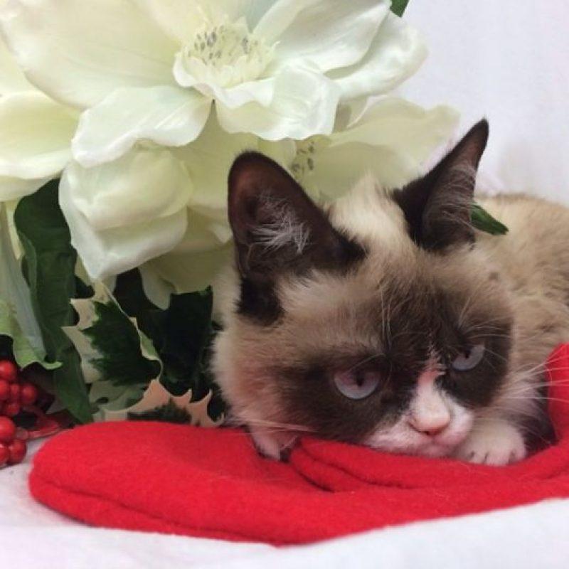 En la cinta, Grumpy es una gatita que nadie quiere adoptar Foto:Instagram/Grumpy Cat