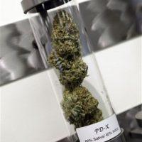 Según un estudio de Drug Policy.com, la criminalización de la marihuana impulsa mayores niveles de violencia y corrupción y no previene el consumo de la droga. Información: Mic.com Foto:AP