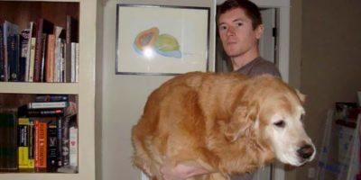 Meses, años o décadas después, los dueños de esta galería muestran una relación constante con sus perros. Foto:Imgur