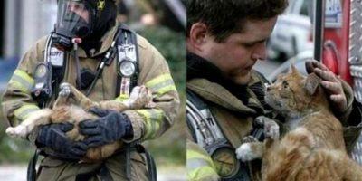 Un bombero devolviéndole la vida a un gatito Foto:AP