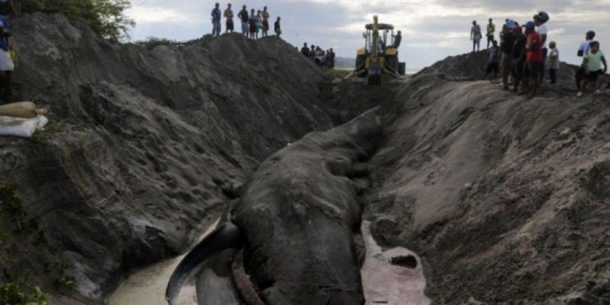 Ballena azul muere en la costa del pacífico de Nicaragua
