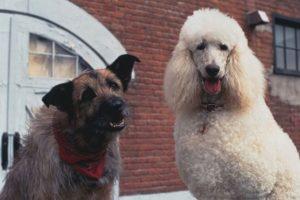 """En 1993 prestó su voz a """"Rocks"""", un perro callejero, en el filme """"Mira quién habla"""" Foto:Twitter"""